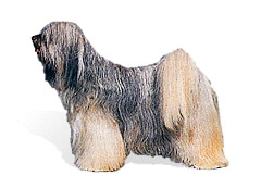 Terrier tibetain